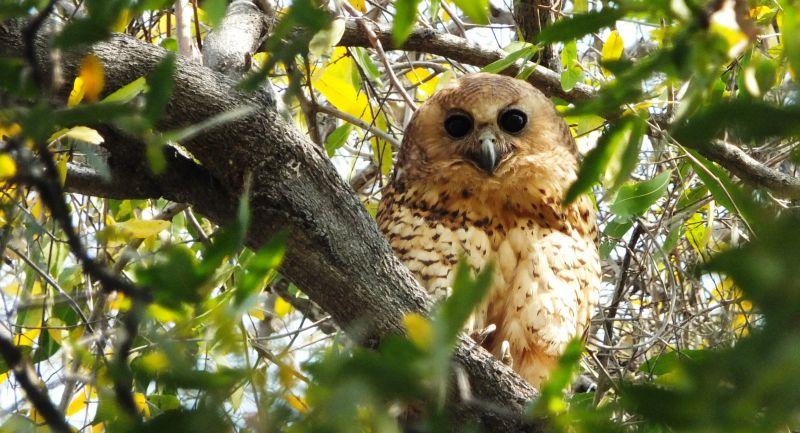 Les 694 espèces d'oiseaux en Namibie