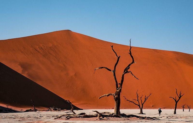 Pourquoi choisir un safari en Namibie ?