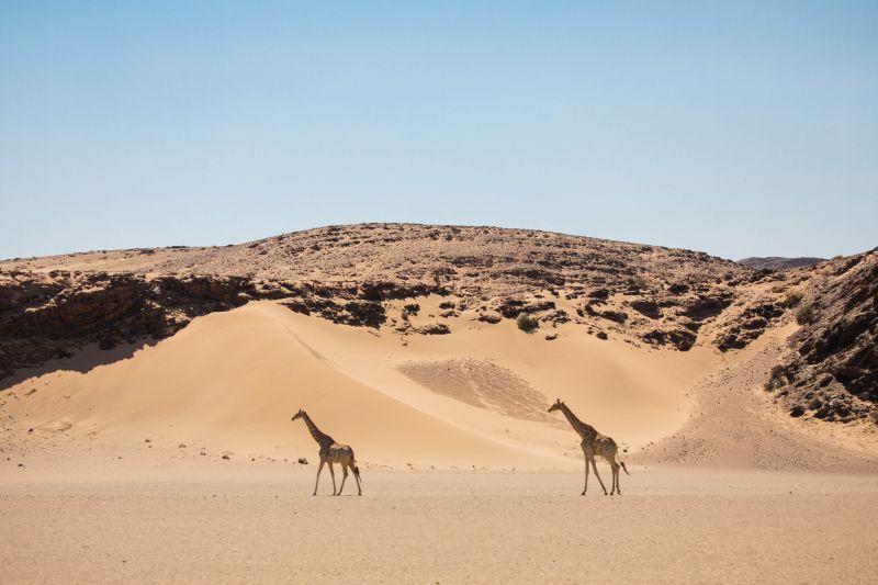 Que faire, que voir lors d'un safari en famille en Namibie ?