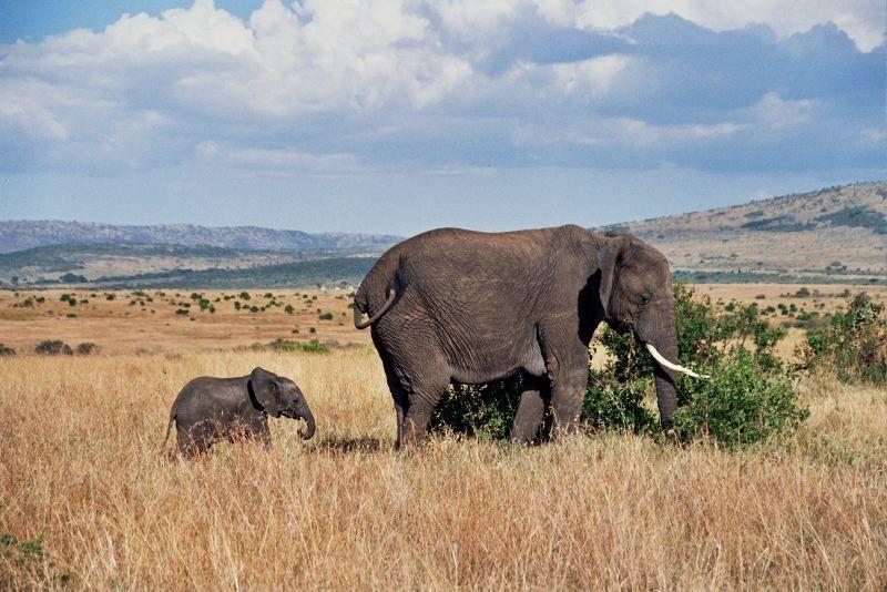 Pourquoi choisir un safari au Kenya ?