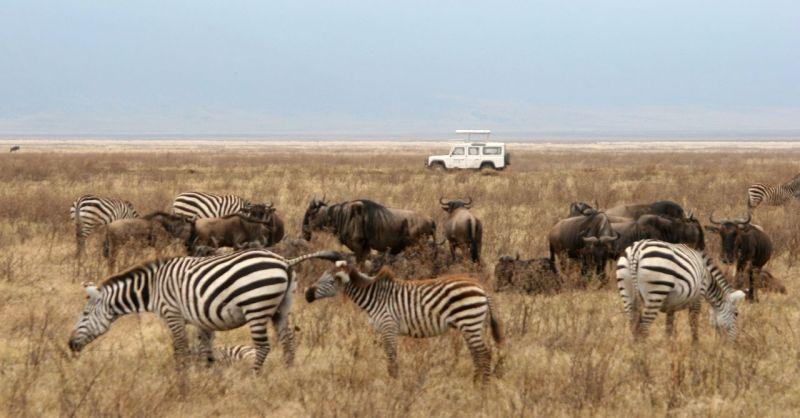 Pourquoi choisir un safari en Tanzanie ?