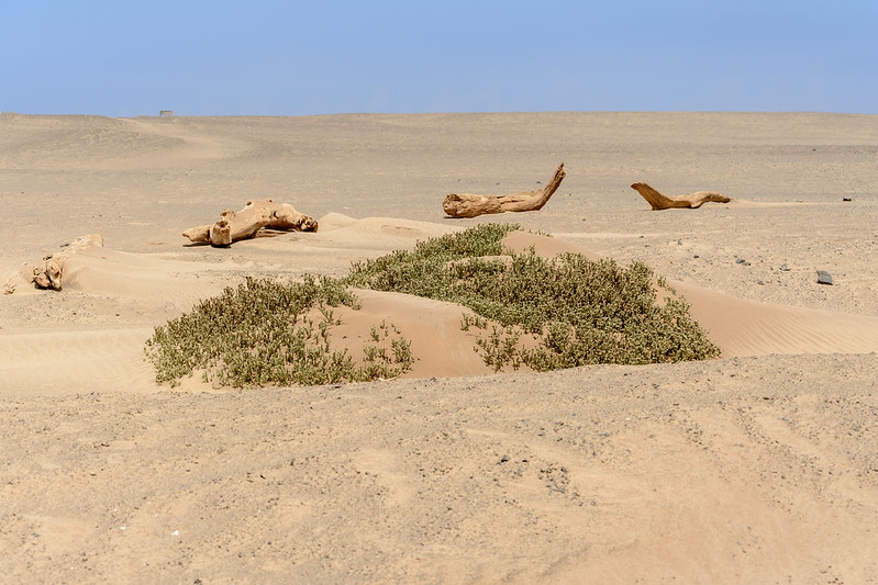 Skeleton Coast 3