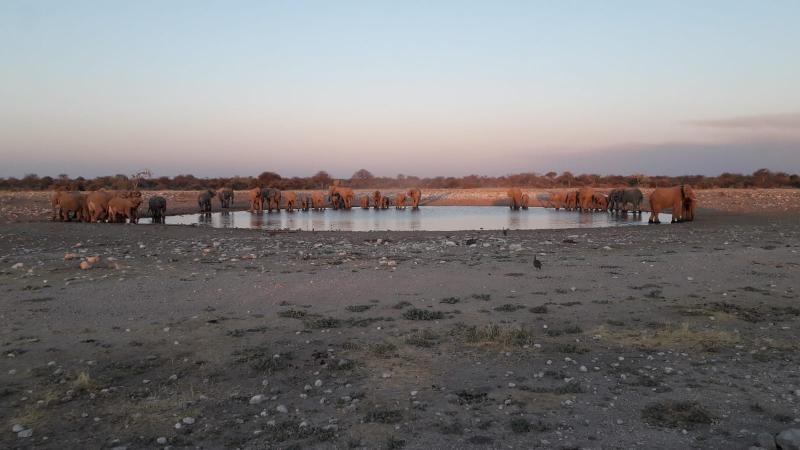 Troupeau d'éléphants - Parc National d'Etosha