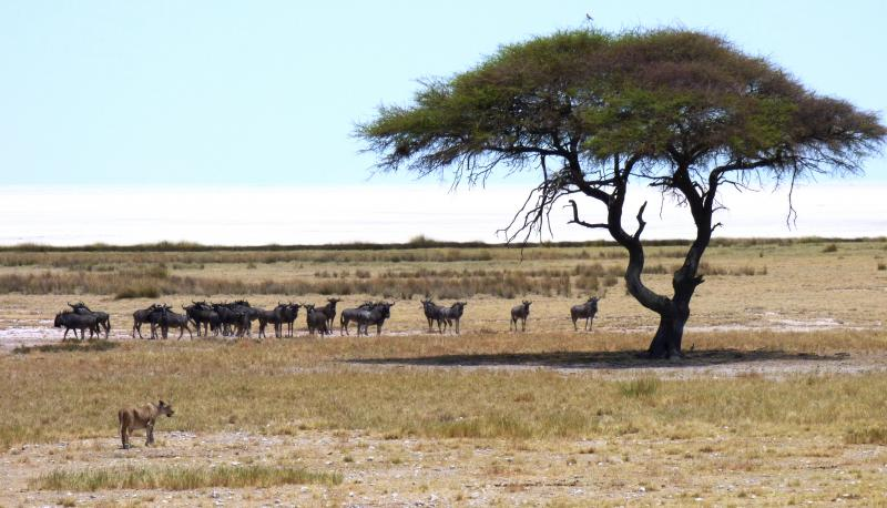 Safari en Namibie en autotour : les plus beaux sites en campements